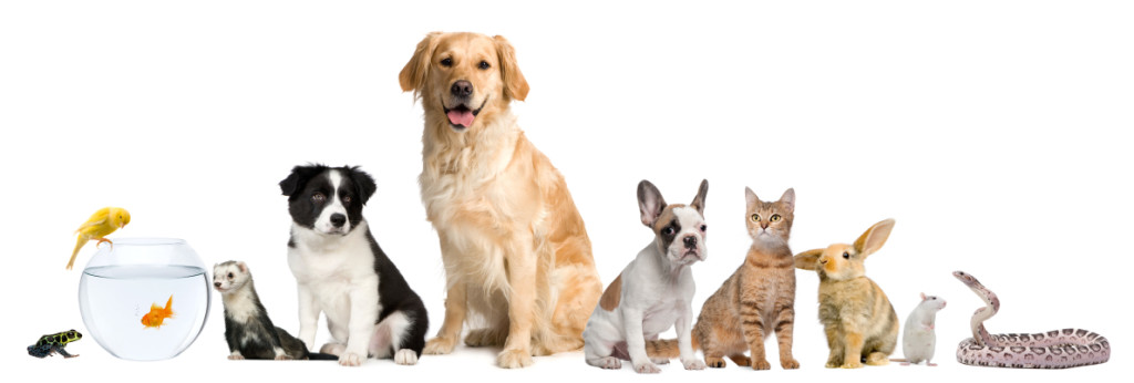 Health Report: Discover The Amazing Effects Of Pets On Human Health
